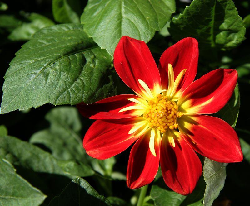 portlandflower1.jpg