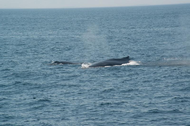 humpbacks-4168.jpg