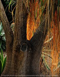 015-tree_sunlight-dsm-14jan09-cvr-1202