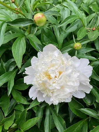 2020-05-20 Flowers