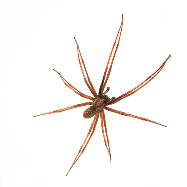 Large Spider on wall - Gelsenkirchen, North Rhine Westfalia, Germany
