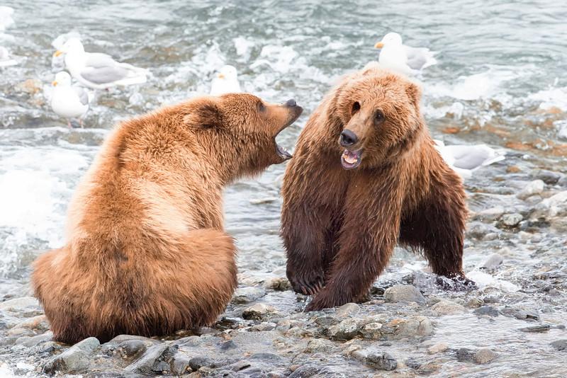 Alaska_2013_FH0T5012.jpg