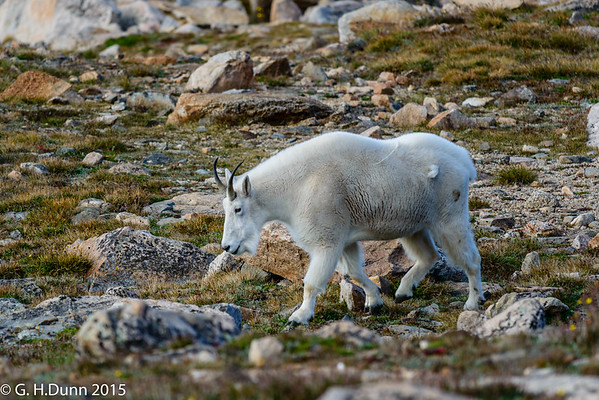 2015-09-05 - Mt. Evans, Vail, RMNP