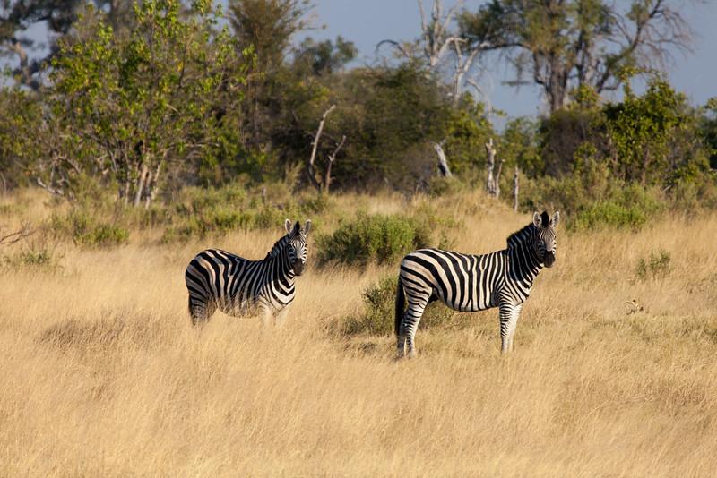 Botswana-31.jpg
