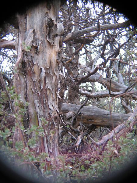 Exquisite Bark, Secret Canyon, AZ