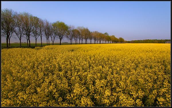 Landbouw/ Agriculture