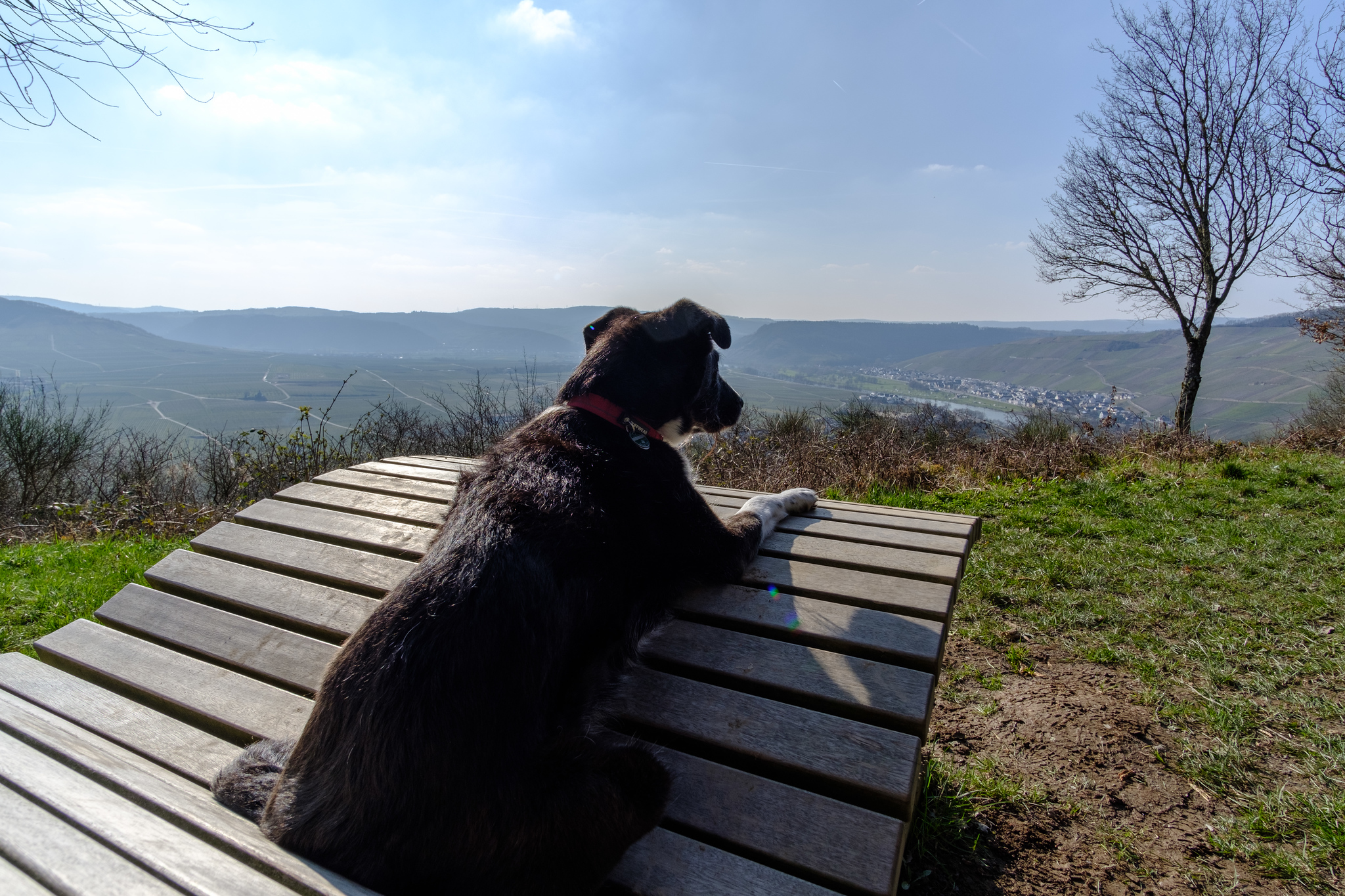 Bijou on a bench overlooking a valley