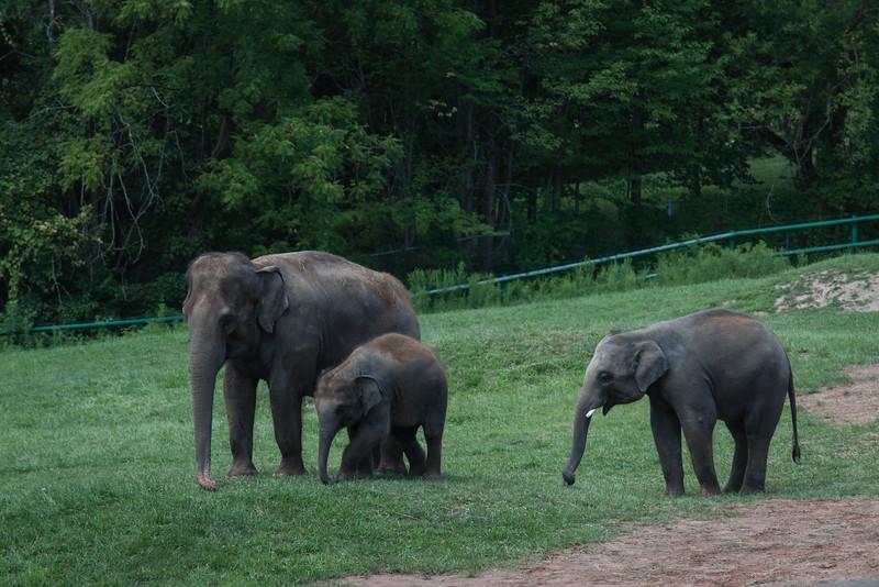 Syracuse Zoo August 2020-11.jpg
