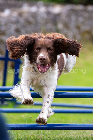 Dog Agility at Grassgarth