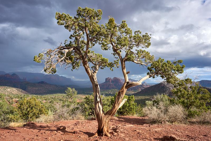 Arizona_DSC09790.jpg