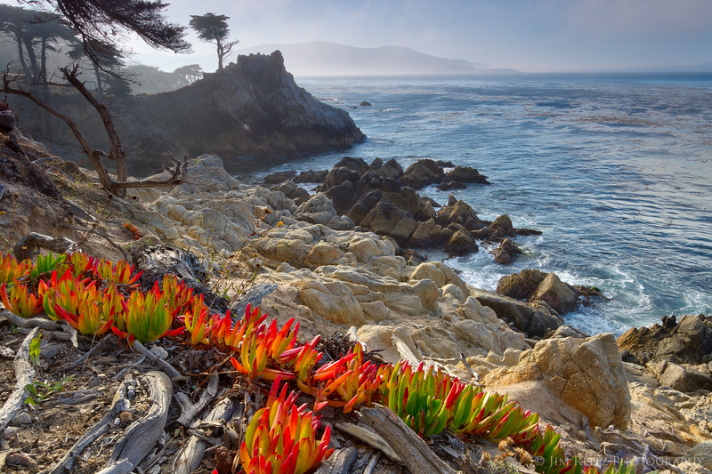 Brilliant new shoots of iceplant grow on the rocky shores along 17-Mile Drive.