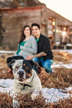 Maternity Photoshoot with Razor the Rottweiler cross