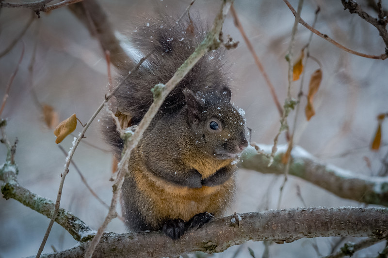 20180108-Backyard_Squirrel-004of004-HDR