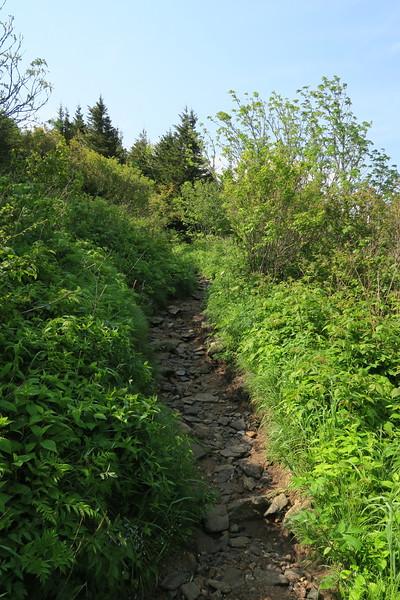 Art Loeb Spur Trail -- 5,900'