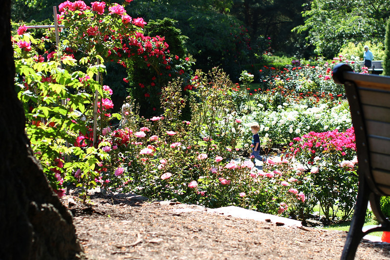 Portland International Rose Test Garden  2256.jpg