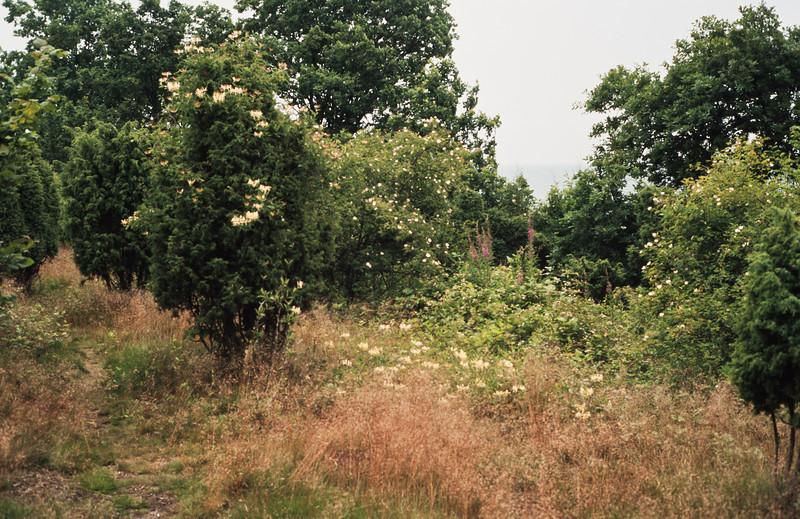 1980_Natur_Skane-52.jpg