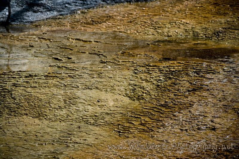 20100713_Yellowstone_2792_1.jpg