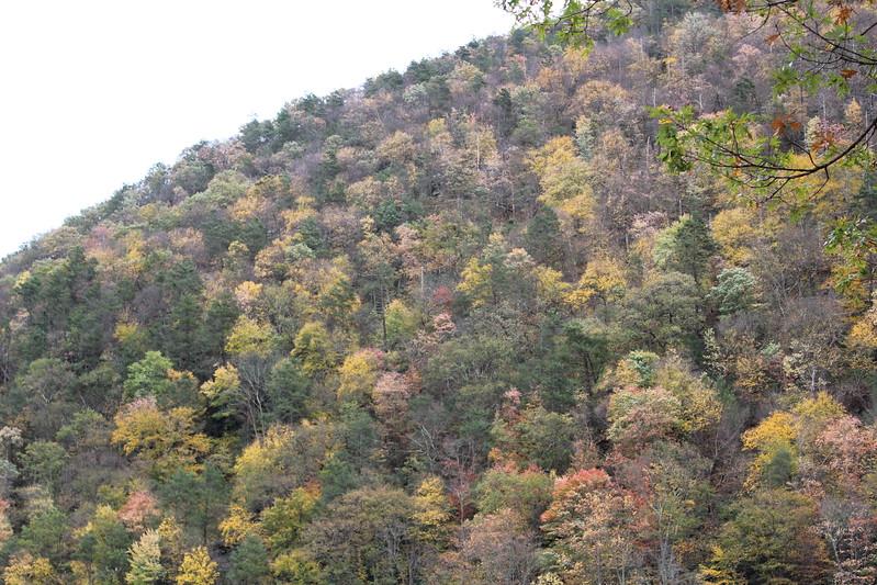 IMG_7420 Dunnfield Creek Falls (10).JPG