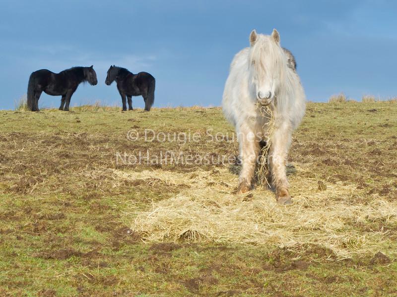 'Ponies'<br /> 15 January 2012<br /> Auchineden, Scotland