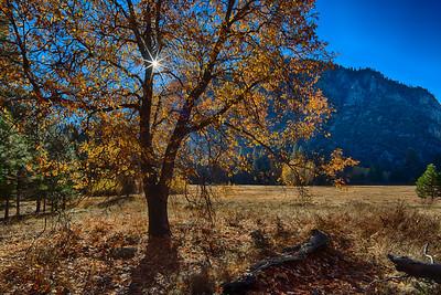 Yosemite Thanksgiving