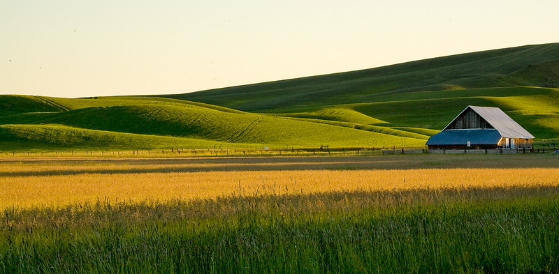 Palouse Region, near Colfax, WA