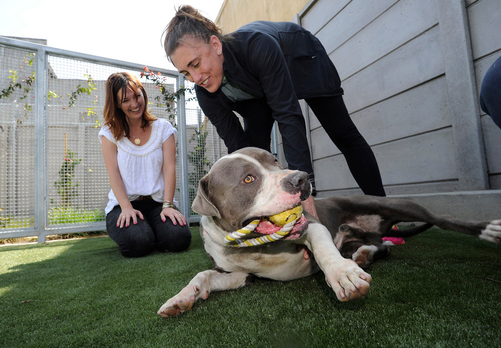 . Robin Purcell and Katie Larkin from the non-profit Angel City Pit Bulls, take a look at a dog that they want to help find a home for. The South Los Angeles Animal Services Center officially opened today at 1850 West 60th Street. Mayor Antonio Villaraigosa and other city officials cut a ribbon and went on tours to see the state of the art facility that showcases animals in a way that is humane, clean and allows pets to meet potential new families. The outdoor kennels reduce disease transmission and noise, while other animals like rabbits and reptiles are given more prominence in the location where they are viewed.  Los Angeles, CA 4/4/2013(John McCoy/Staff Photographer