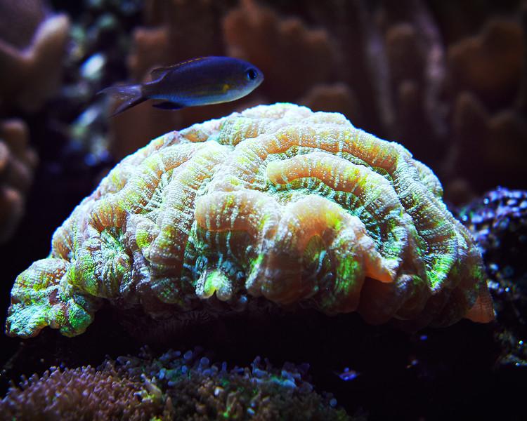 Seattle Aquarium VI