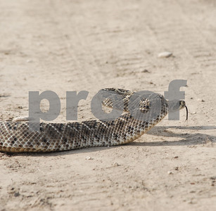 be-aware-of-a-snake-in-the-grass-in-parts-of-texas