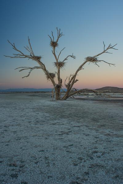Sonny Bono Salton Sea Wildlife Refeuge