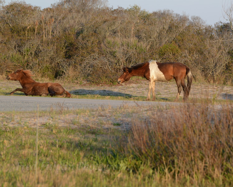 Horses 1 05_02_18.JPG