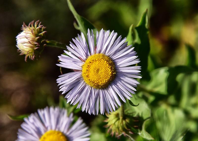 NEA_0091-7x5-Flower.jpg