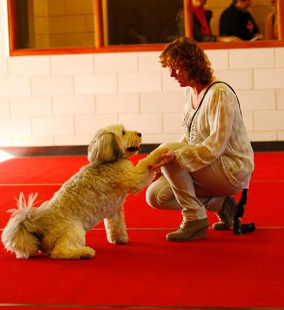 Dogdancewedstrijd KC Delft 16 maart 2014
