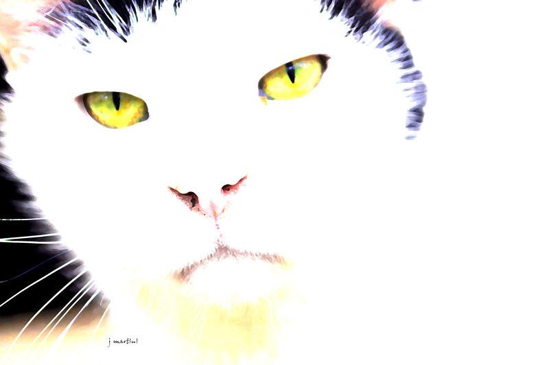 cat 4-17-2011.jpg