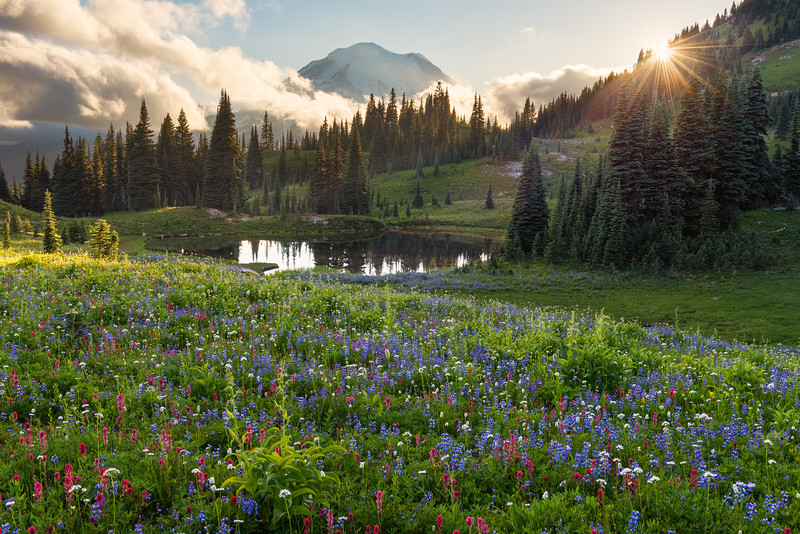Mt. Rainier Wildflower Meadow