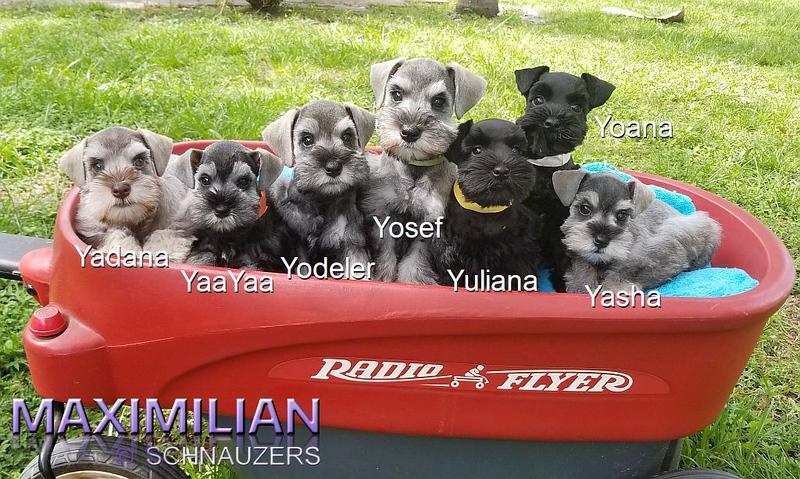 Paloma Pups 062.jpg