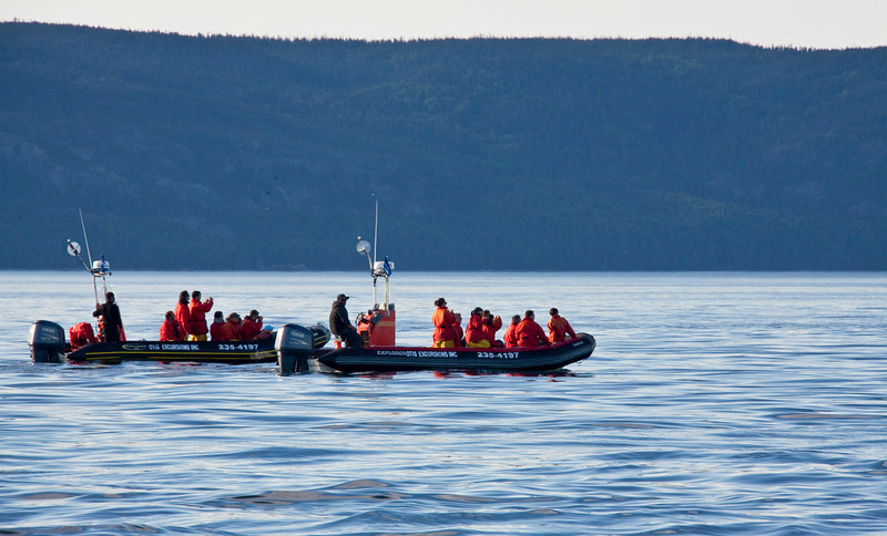 2011 quebec whale watching (58 of 80).jpg