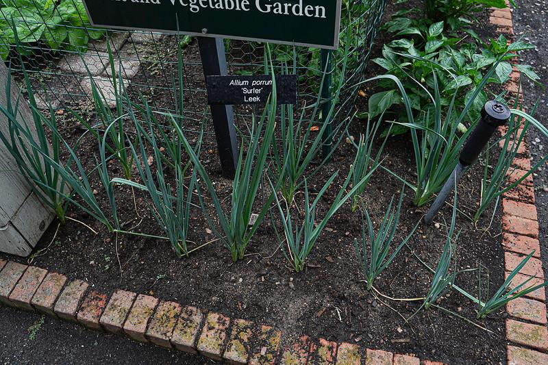 Arboretum, July Harvest-39.JPG