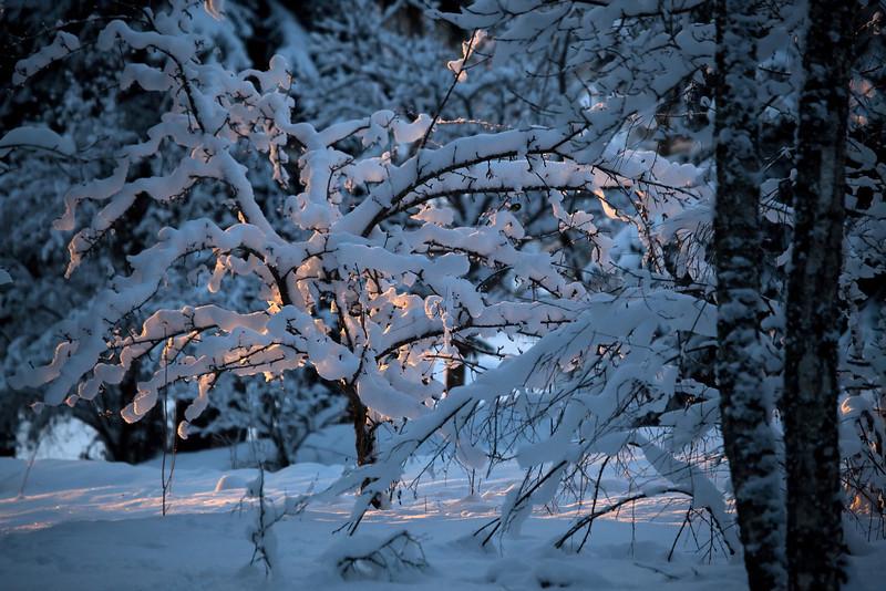 Dag_283_2013-jan-19_6664.jpg