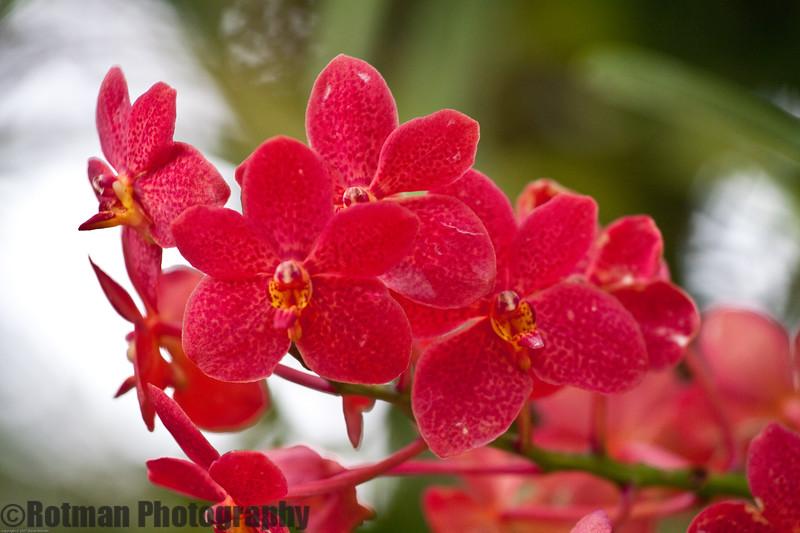 Singapore gardens-6305.jpg
