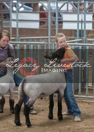 Market Lambs