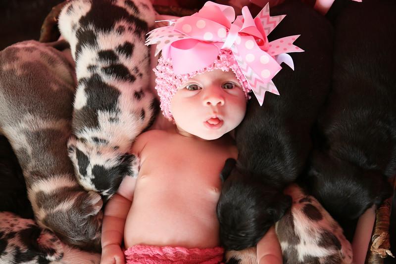 PEP-Feb7-Puppies-8517.jpg