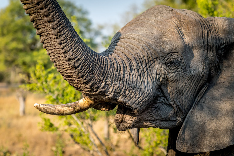 Zuid Afrika 2015 298.jpg