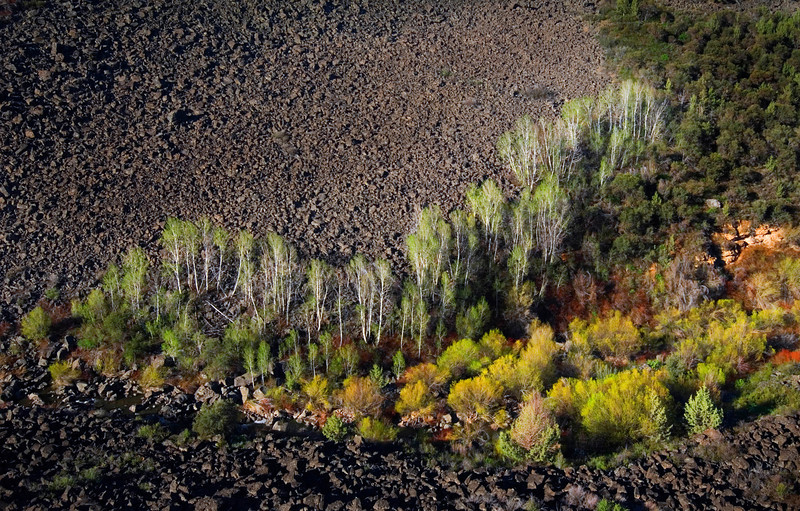 Aspen and Lava, Owyhee Canyonlands - Idaho  South of a small private dirt path (with the peculiar name of 'Dickshooter Road') deep within the Owyhee Canyonlands, there is a stream that splits a wide acreage of tumbled basalt stone. In the spring, the stream flows, the trees become green, and for a short period of time - the desert blooms.