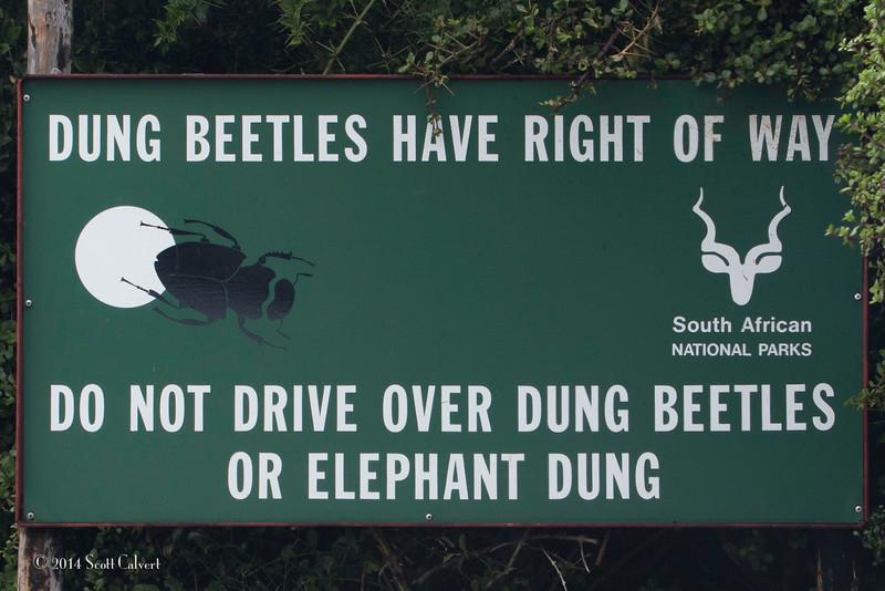 Dung Beetles-3.jpg