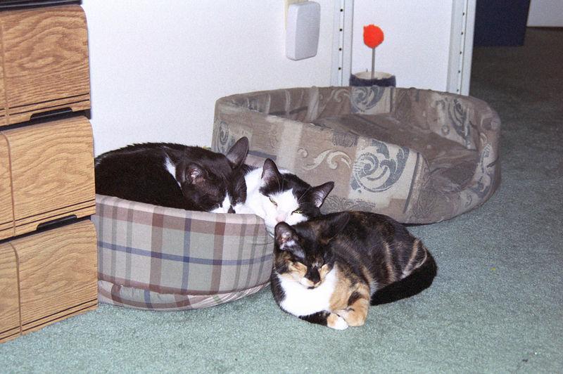 2003 12 - Cats 64.jpg