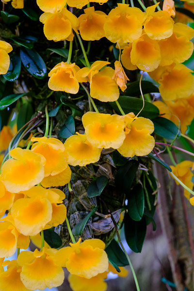 20190405 National Botanical Garden 020.jpg