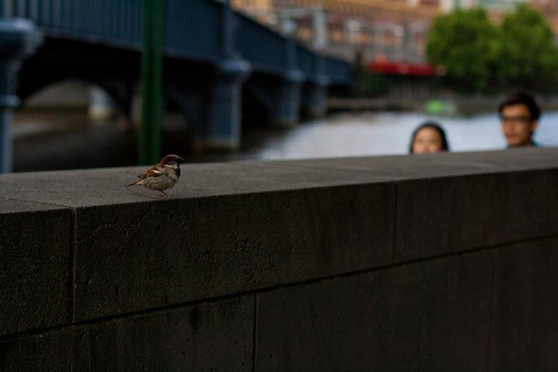 photowalk2011_0495.jpg