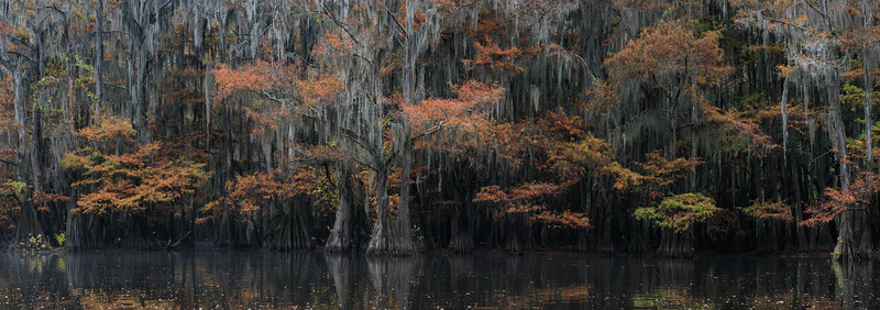Cypress_Swamps_1117_PSokol-1337-Pano-Edit.jpg