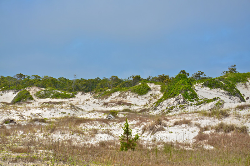 St. George Island State Park occupies the eastern nine miles of beaches on this barrier island just four miles off the coast of Apalachicola.  With camping and picnic areas on pristine white-sand beaches and the last five miles only accessible by foot, this park is very popular with visitors wishing for a calming day at the beach.