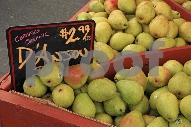 Organic D'Anjou 4 sale 5901.jpg